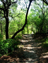 Trail at Lake Rogers Park in Odessa